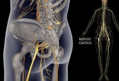 Proste ćwiczenia fizyczne na złagodzenie bólu nerwu kulszowego Best Abdominal Exercises, Back Pain Exercises, Sciatic Nerve, Nerve Pain, Leiden, Muscle Stretches, Giving Up Smoking, Neck And Back Pain, Back Pain