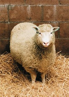 'Dolly' the sheep was/is probably the most famous and remembered cloning related event in the field of science to date. Although the Dolly experienced numerous health issues throughout it's short life-span, an autopsy concluded she died of natural causes, however there is still much debate by society over the fact that her health issues may have been consequences resulting from being cloned. The success of the experiment created a greater understanding of the development of cells and…