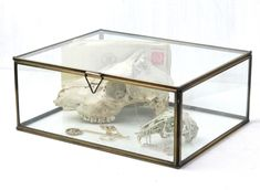 This large glass jewellery box is an elegant way to display your jewels, curios or small collectables. The brass edging and clear glass make this jewellery box a cut above the rest. It has style and sophistication beyond comparison. Glass Jewelry Box, Jewellery Box, Gifts For Women, Gifts For Her, Unique Valentines Day Gifts, Glass Boxes, Vintage Bags, Vintage Furniture, Clear Glass