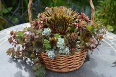 Succulent Utopia Succulents, Goodies, June, Plants, Sweet Like Candy, Gummi Candy, Succulent Plants, Plant, Planets