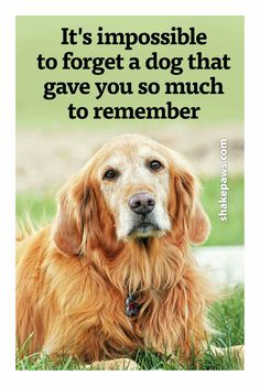 Never forget the ones you loved and who loved you back.