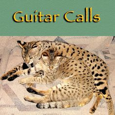 In this pic, Capoeira and Amoraeah Flame are cuddling together. It goes well with this song. Listen to Guitar Calls, by Ron Nathan.