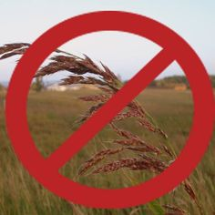Six reasons to go grain free!