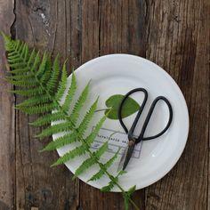 diy botanical plates