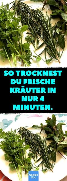 So trocknest du frische Kräuter in nur 4 Minuten. This is how you dry fresh herbs in just 4 minutes. Preserve Fresh Herbs, Herbal Tea Benefits, Herbal Teas, Tea Plant, Herbs Indoors, Flower Tea, Tea Blends, Growing Herbs, Medicinal Herbs