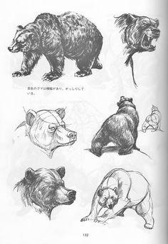 Bear Drawing, Furry Drawing, Anatomy Drawing, Animal Sketches, Animal Drawings, Drawing Sketches, Bear Watercolor, Bear Paintings, Bear Illustration