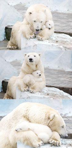 exPress-o: Bear Love