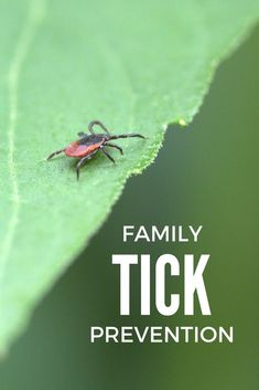 Tick season is upon us! Here are tips to help prepare your family for the prevention and removal of ticks. Tips For Traveling Alone, Packing Tips For Travel, Travel Advice, Traveling By Yourself, Family Camping, Family Travel, Family Adventure, Adventure Awaits, Columbia Outdoor