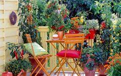 Come arredare un terrazzo con fiori e piante: un spazio verde tutto per voi - Avete un terrazzo ma non sapete come arredarlo? Ecco tutti i nostri consigli per arredare un terrazzo con fiori e piante.