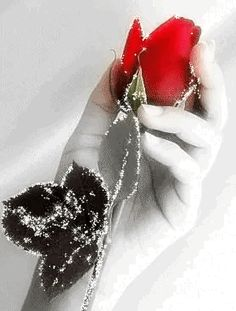 Gif hand holding a sparkling rose Roses Gif, Flowers Gif, Beautiful Rose Flowers, Beautiful Gif, Love You Gif, Love You Images, Beau Gif, Gif Photo, Rose Images
