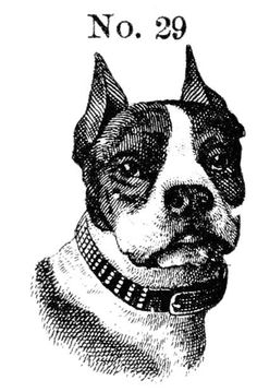 Dog No. 29
