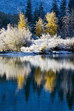 Inyo National Forest, California White and yellow snowy trees mirror water reflected in blue lake