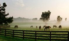 Kentucky Horse Farm #kentucky #horses #farms