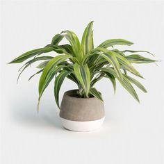 Online Plant