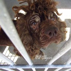 A4835625 I am a very friendly 5 yr old male chocolate Cocker Spaniel. I came to the shelter as a stray on May 28. available 6/1/15. located in bldg 4 (no public view) Baldwin Park shelter https://www.facebook.com/photo.php?fbid=974654605879710&set=a.705235432821630&type=3&theater