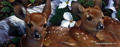 http://www.wildlifeprints.com/collections/gadamus/products/jerry-gadamus-full-circle-24-x10