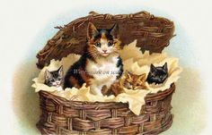 $2.75 Maguire Calico Cat Repro Greeting Card Mama w Kittens in Basket in my Etsy store today