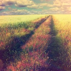 I imagine the Camino will be like this in places.