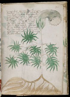 Voynich Manuscript ヴォイニッチ手稿 1912年イタリアで発見された古文書。暗号とおぼしき未知の文字で記され、多数の彩色挿し絵が描かれている