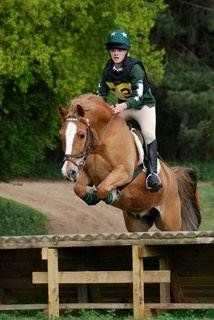 Kit Kat - 13.2hh 14 yrs chestnut Gelding for sale http://www.equineclassifieds.co.uk/Horse/132hh-14-yrs-chestnut-gelding-for-sale-listing-392.aspx#.UpZPmCeMWSo