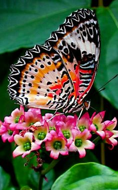 Butterfly on kalanchoe