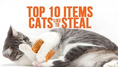 Wonder what happened to your hair bands/corks/Post-Its/straws? Ask your cat.