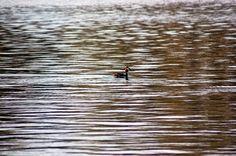 Jemina Staalon Veden vuosi 2: Lapinlahti ja veden vuosi: lintukoto, merenranta