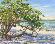 Beautiful Florida paintings for the Florida home by acclaimed Florida artist Carol McArdle Watercolor Sea, Watercolor Pictures, Paintings For Sale, Original Paintings, Grape Painting, Grape Tree, Tree Quilt, Artwork Display, Painting Still Life