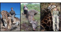 Der Jagdtourismus trägt maßgeblich zur Ausrottung selten gewordener Tierarten in Afrika bei. Unglaublich aber wahr. Das Bundesamt für Naturschutz erteilt noch immer Importgenehmigungen für Jagdtrophäen. Doch wir können etwas dagegen tun. Unterschreiben Sie diese Petition, damit Deutschland künftig...