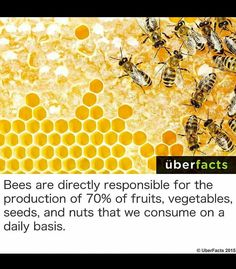 ♡ bees