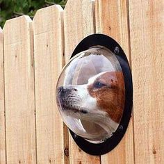 Give your dog the best view. I love this idea! Custom fence idea.
