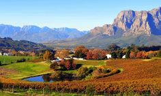 Cape Winelands Tour - The Cape WInelands regions are characterised by natural scenery, time-honoured cultural heritage and worlclass wine estates. This tour takes you on a journey through Paarl, Stellenbosch & Franschoek. South Africa Safari, Dutch House, Wine Vineyards, Cruise Destinations, Table Mountain, Natural Scenery, Sandy Beaches, Landscape Paintings, Around The Worlds