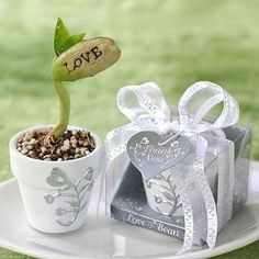 bean pots on sale at reasonable prices, buy FedexFreeshipping I LOVE YOU magic bean with resin vase jackbean wedding favor gift for guest wedding souvenir party favor gifts from mobile site on Aliexpress Now! Wedding Favors And Gifts, Gift Wedding, Wedding Souvenir, Party Gifts, Party Favors, Small Flower Pots, Party Giveaways, Love Messages, Baby Shower Favors