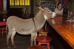 Pistols Saloon in Ramsgate. This is an absolute must on your list of pubs to visit. Gives one a distinct feel of being in a Western movie. Complete with donkey at the pub counter.