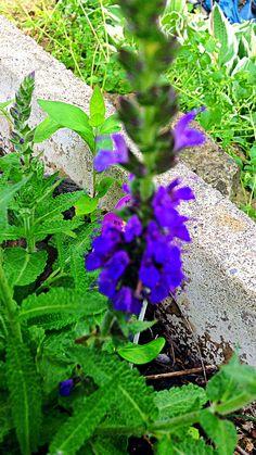 some pretty flowers i saw