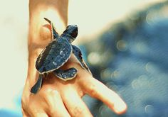 small innocent baby cute sea turtle