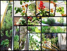 my garden 15/5/2016