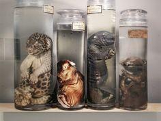 Oddities: animals in formaldehyde