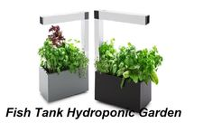 https://www.destructoid.com/?name=kjheert&a=387414&start=0&chaos=ok&who=me  Hydroponic Gardening,  Indoor Hydroponic Garden,Indoor Hydroponic Garden,Hydroponic Farm  When the timer keeps out growth-promoting air -- too crucial hydroponic gardening supplyings within tank farmings -- around the roots from the vegetation.