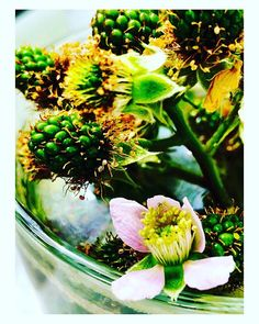 Brombeerzüchter  #brombeere #nature #gerrybuchacher #prettypictures #blackberry Blackberry, Glass Vase, Nature, Plants, Instagram, Decor, Blackberries, Naturaleza, Decoration