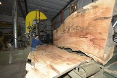 Sawing Big Leaf Maple slabs.  These boards could almost be mistaken for marble!
