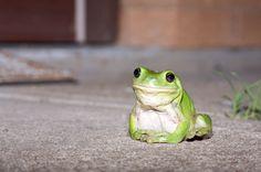 Frogbo!
