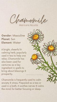 Holistic Remedies, Holistic Healing, Herbal Remedies, Magic Herbs, Herbal Magic, Herbs For Anxiety, Stress And Anxiety, Sage Herb, Herbal Store