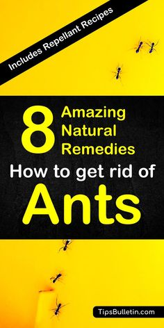 How to get rid of ants. With detailed natural pest control recipes using home remedies - vinegar, ch