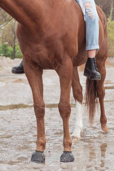 Home is where my horse is stabled - Lifestyle by Yellow Lenz - Bay Horse, Horse Horse, Horse Girl, Equine Photography, Lifestyle Photography, Chestnut Horse, Horse Stables, Beautiful Horses, Yellow