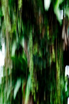 Physical Forest (Rain Tree 03)