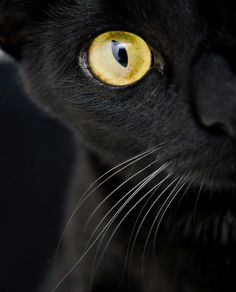 Cats' eyes by Laura Huntley