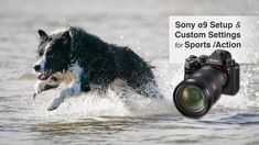 Sony Alpha Setup Settings for Sports, Action and Wildlife Sony, Photoshop Tutorial, Photo S, Two By Two, Wildlife, Action, Branding, Graphic Design