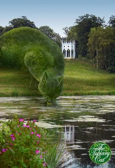 Topiary Cat, done by John Brooker, a retiree aged 75 who lives in Norfolk, UK. Topiary Cat Drinking from a Lake by Rich Saunders Topiary Garden, Topiary Plants, Cat Drinking, Drinking Water, Parcs, Yard Art, Belle Photo, Beautiful Gardens, Garden Landscaping