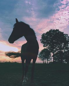 Mom Shares Photo of How the Keto Diet Transformed Her Body After Pregnancy Cute Horses, Pretty Horses, Horse Love, Beautiful Horses, Animals Beautiful, Horse Girl, Equine Photography, Animal Photography, Animals And Pets